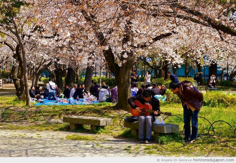 Pr sentation du hanami la f te des cerisiers en fleur horizons du japon - Greffe du cerisier au printemps ...