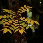 Nature-japon-06