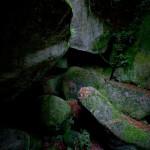 roche-mousse-tsuyu