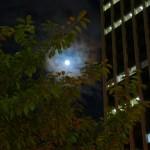 Blue-Moon-08.jpg