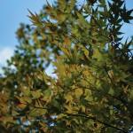 automne-pointe