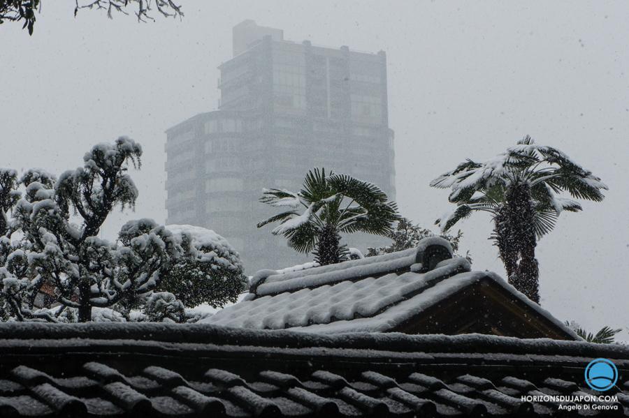 palmier-neige-osaka