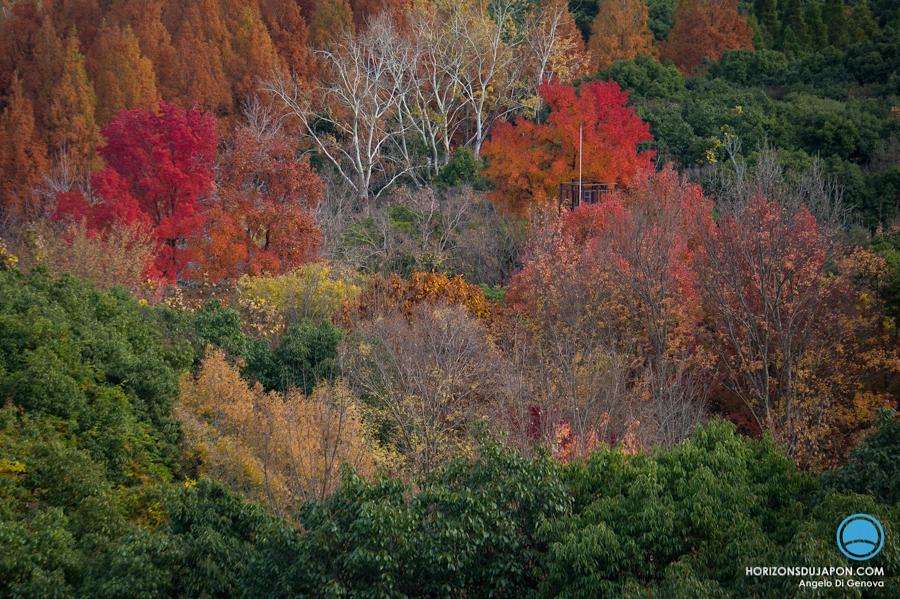 osaka-automne-01