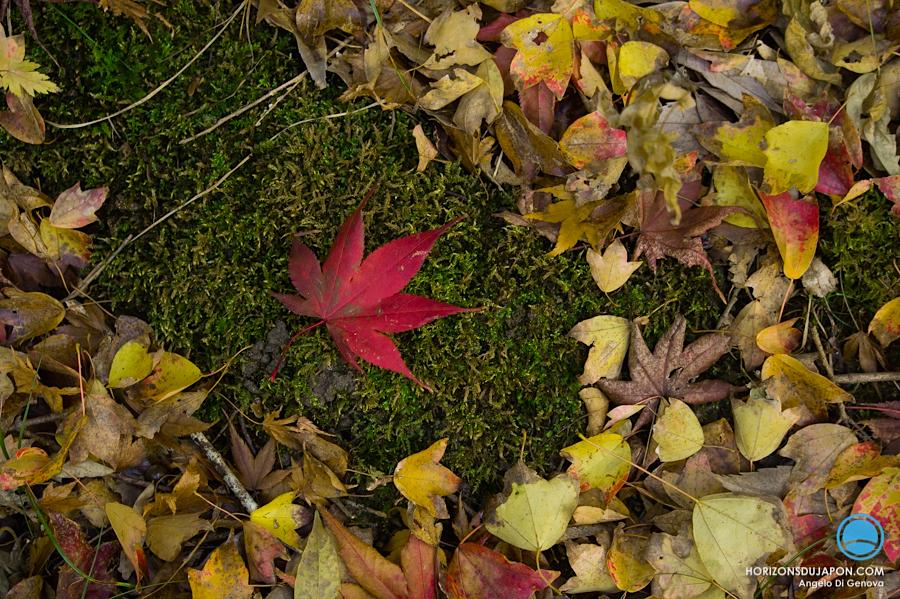 osaka-automne-erable