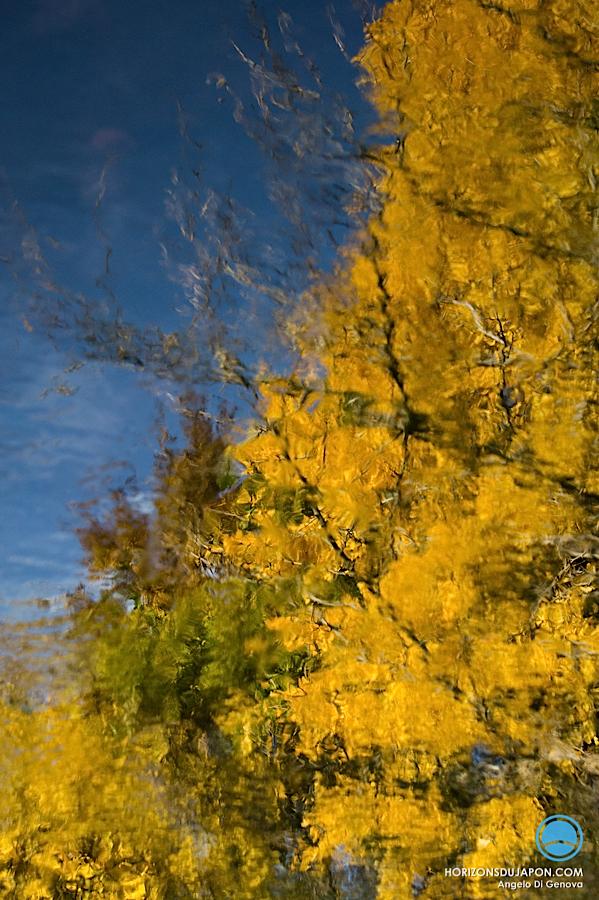 osaka-automne-gingko