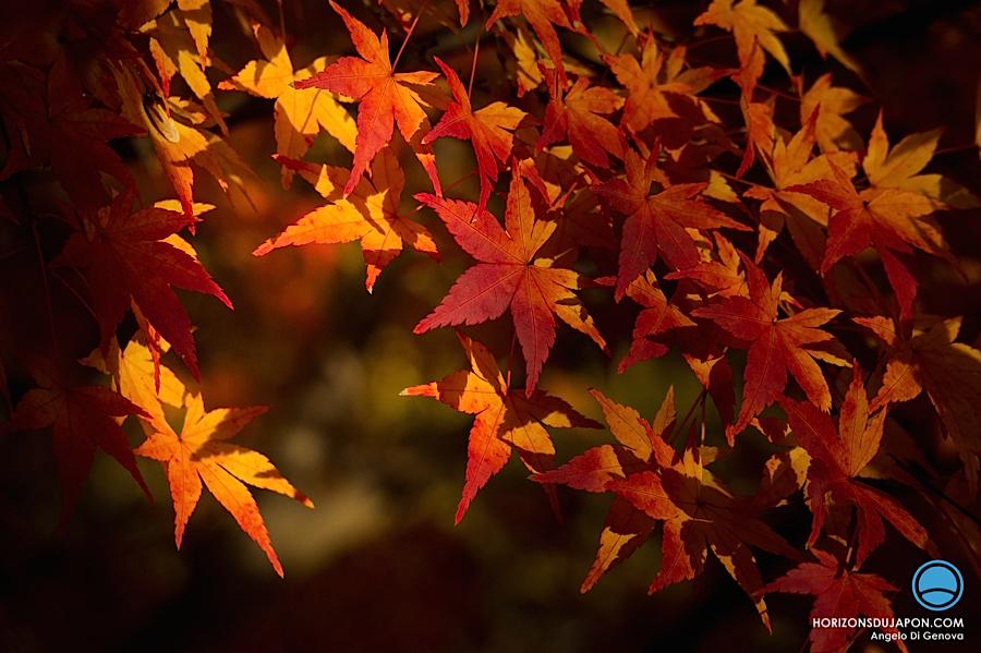 osaka-automne-momiji
