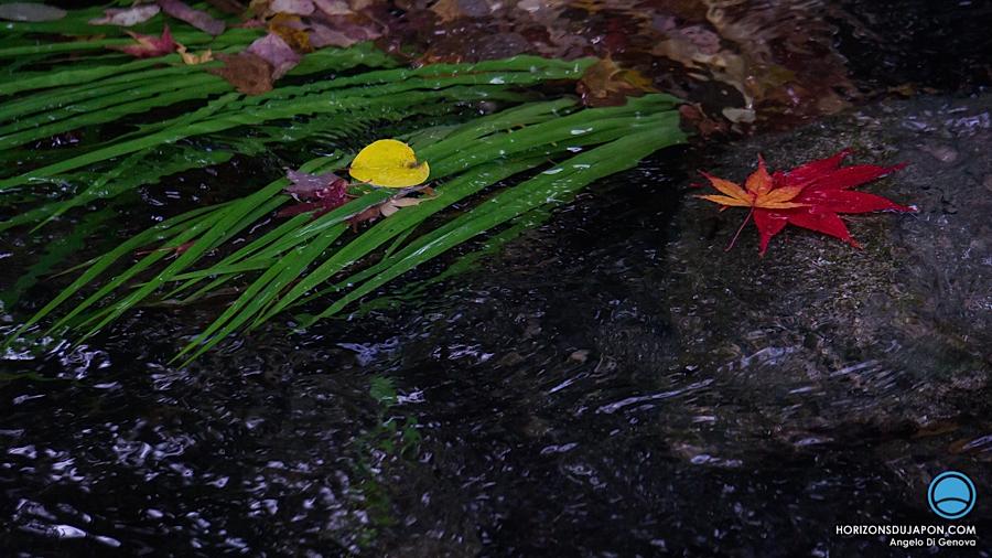 osaka-automne-ruisseau