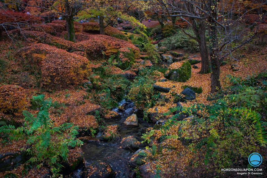 osaka-automne-tapis