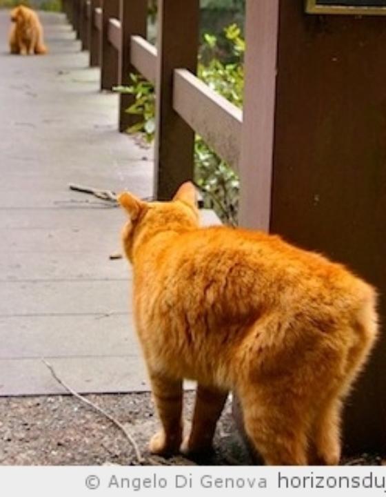 Les chats de la route du Tokaido