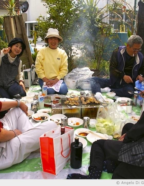 Un Hanami après la catastrophe du 11 mars