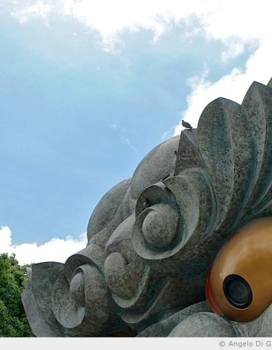 Bilan de l'été pour les Osaka Safari