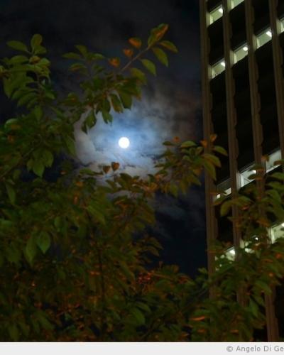 Un instant partagé sous la lune bleue