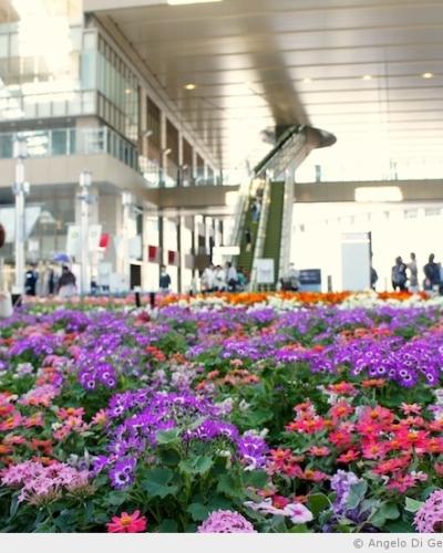 La gare d'Osaka en fleur