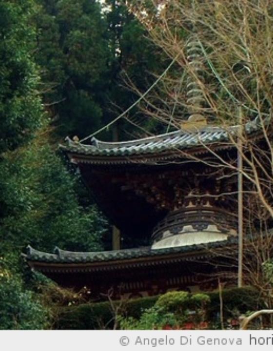 Évolution, nouveautés et améliorations des safaris dans le Kansai