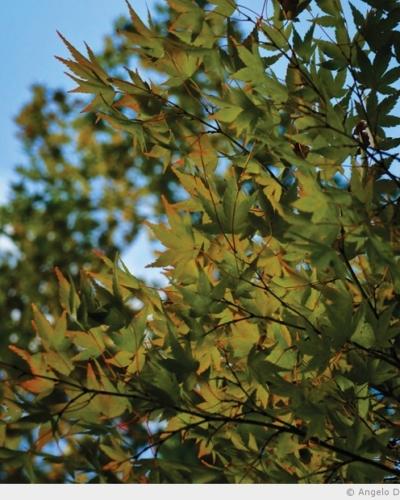 L'automne qui pointe sur les feuilles
